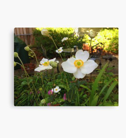 Japanese Windflowers  Canvas Print