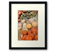 Pumpkins at the Orchard 2 Framed Print