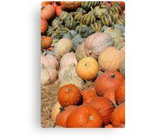Pumpkins at the Orchard 2 Canvas Print