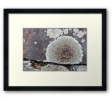 Stone Fence with Lichen Framed Print
