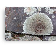 Stone Fence with Lichen Canvas Print