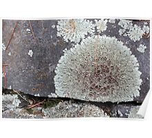 Stone Fence with Lichen Poster