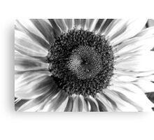 Sunflower 14 BW Canvas Print