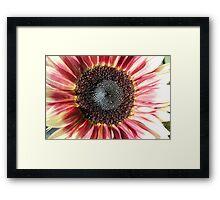 Sunflower 14 Framed Print