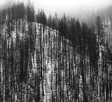Pine pattern ridge - photography by Paul Davenport