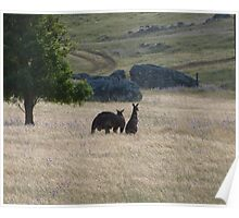 Big Dad & Floe in the paddock, 'Arilka' Adelaide Hills. S.A. Poster