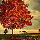 Autumn in Millennium Park by LudaNayvelt