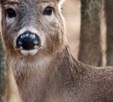 Female White-tailed Deer Sticker