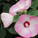 Pink flowers by AuntieBarbie