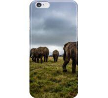 Knysna Elephant Park 1 iPhone Case/Skin
