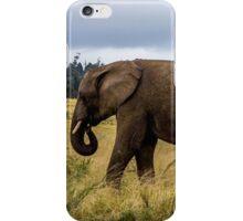 Knysna Elephant Park 2 iPhone Case/Skin