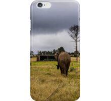 Knysna Elephant Park 3 iPhone Case/Skin