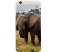 Knysna Elephant Park 4 iPhone Case/Skin