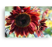Sunflower 15 Canvas Print