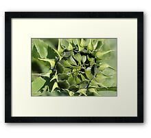 Sunflower Awakening Framed Print