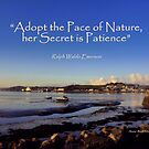 The Pace of Nature by Charmiene Maxwell-Batten