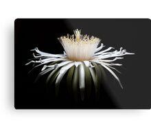 Solar Crown Bloom Metal Print