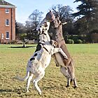 Donkey Rugby by John Thurgood