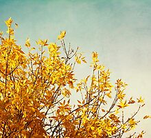 Autumn Yellow by LawsonImages