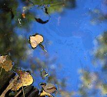 Wetland Fall 10 by marybedy
