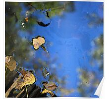 Wetland Fall 10 Poster