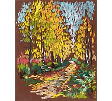 Golden birches in a park Photographic Print