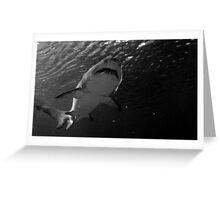 shark- Sea life Aquarium 2014  black and white  Greeting Card