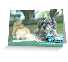 Cute pup Greeting Card