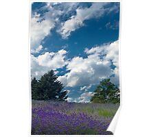 Lavender Hill Poster
