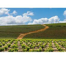 Stellenbosch vineyard Photographic Print
