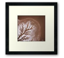 A Tree of Earth and Water Framed Print
