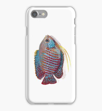 Dwarf Gourami  iPhone Case/Skin
