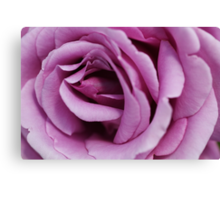 She's  Pink - Rose Canvas Print