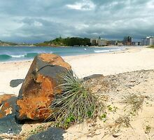 Beautiful Forster 0002 by kevin chippindall