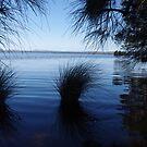 Myall Lakes by Liz Worth