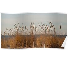 Dune Grass by the Sea Poster