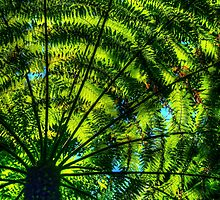 Patterns of fern & light by Michael Matthews