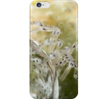 Spider Crab iPhone Case/Skin
