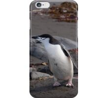 Chinstrap penguin iPhone Case/Skin