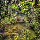 Campaspe river by shaynetwright
