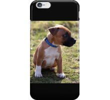 Staffordshire Bull-Terrier Puppy iPhone Case/Skin