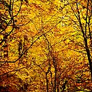 Golden Forest by UniSoul