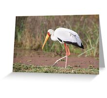 Yellow-billed Stork Feeding Greeting Card