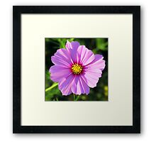 Anemone in Violet Framed Print