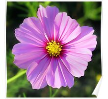 Anemone in Violet Poster