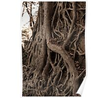 Carving Tree Poster