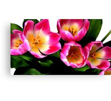 Bunch of pink tulips Canvas Print