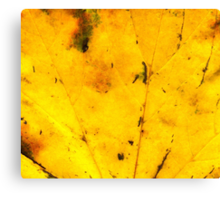 Fall maple leaf texture 2 Canvas Print