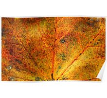 Fall maple leaf texture 3 Poster