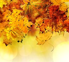 Fall maple leaves 4 by AnnArtshock